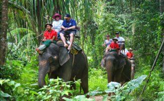 Krabi Elephant trekking option 2
